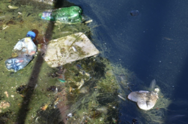 Ocean śmieci