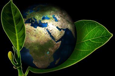 Marnowanie żywności na świecie