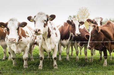Świeże mleko z mlekomatu
