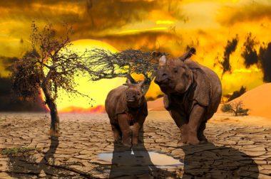Fakty i mity polityki klimatycznej