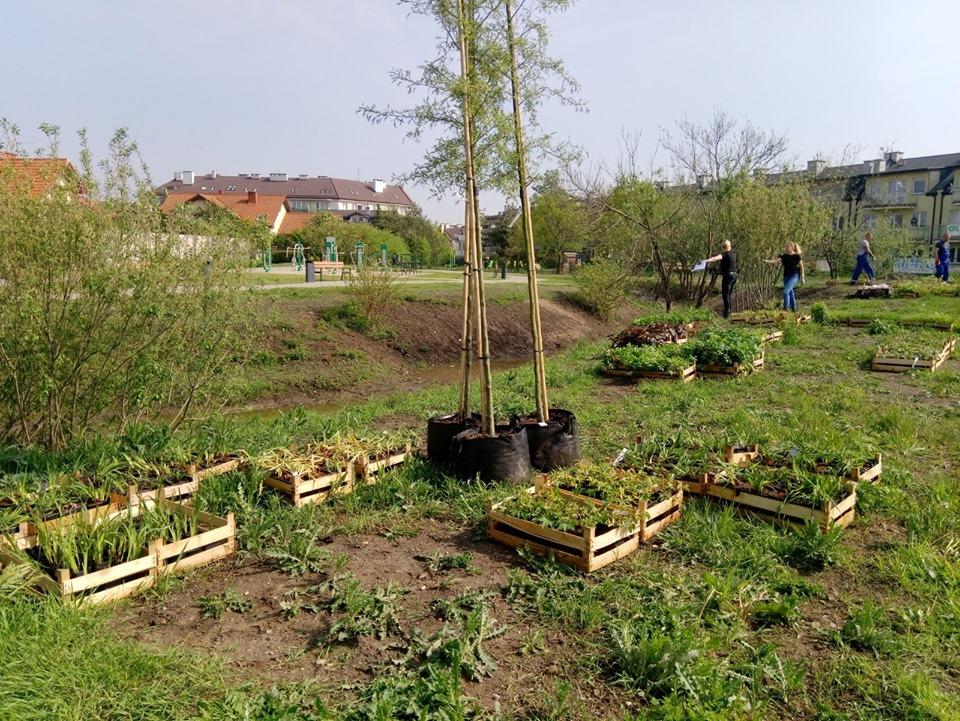 ogród deszczowy