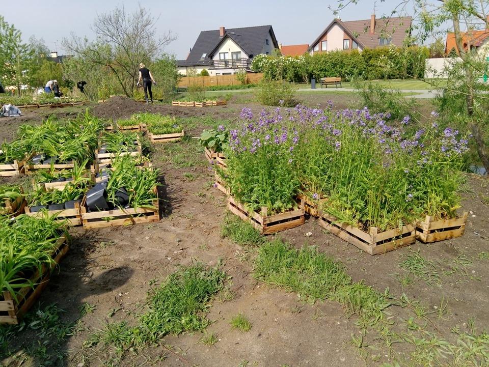 ogród deszczowy1