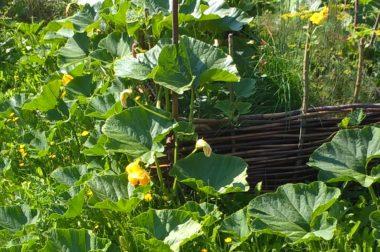 Ogród – grządka wyniesiona. <p>Jesienne niespodziewane plony!