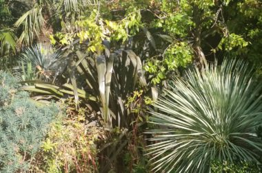 Ogród deszczowy – moda czy konieczność?