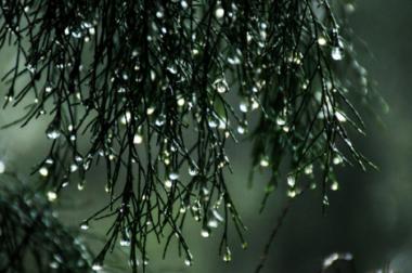 Deszcz to wiele kropel <p>– codzienne działania na rzecz ochrony bioróżnorodności <p> i zapobiegania skutkom zmian klimatu