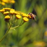 Hotele dla owadów – zrób to sam