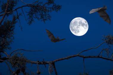 Nietoperz – nocny przyjaciel