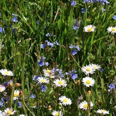 Kwietne łąki czynią życie piękniejszym